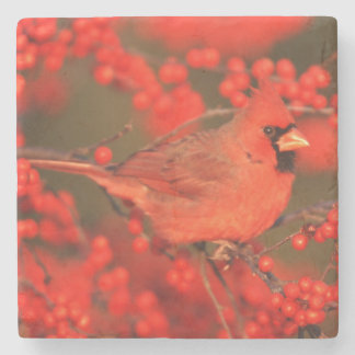 Red Northern Cardinal Male, IL Stone Beverage Coaster