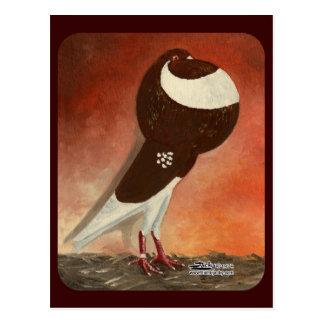 Red Norwich Cropper Pigeon Postcard