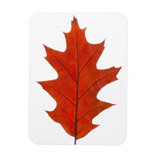 Red oak autumn leaf rectangular photo magnet