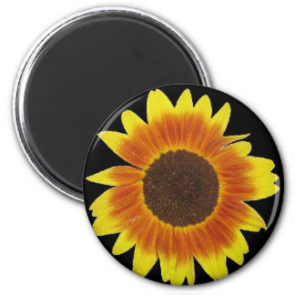 Red, orange, and yellow sunflower 6 cm round magnet