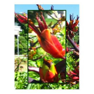 Red Orange Blooms of Flax Postcard