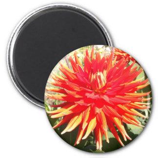 Red Orange Dahlia Flower in the Sunshine 6 Cm Round Magnet