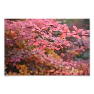 Red Orange Fall Foliage Autumn Leaves Nature Photo