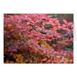 Red Orange Fall Foliage Autumn Leaves Nature Photo Card