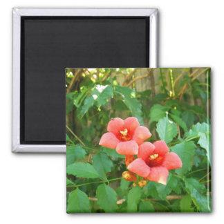 Red-Orange Horn Vine Flower Square Magnet