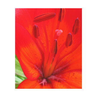 Red Orange Lily Flower Gallery Wrap Canvas
