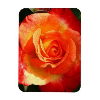 Red-orange rose rectangular photo magnet