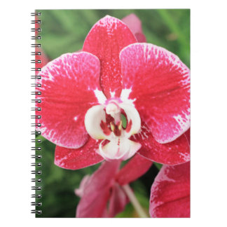 Red Orchid blossom notebook