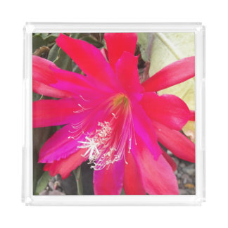 Red Orchid Cactus Bloom Floral Acrylic Tray