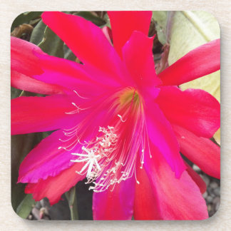 Red Orchid Cactus Bloom Floral Coaster Set