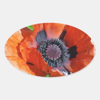 Red Oriental Poppy decorative stickers