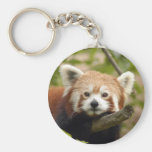 red-panda-005