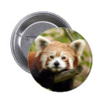 red-panda-007 buttons