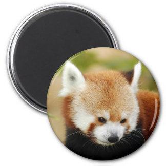 red-panda-030 magnet