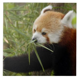 red-panda-031 large square tile