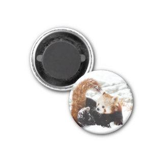 Red panda boy as magnet