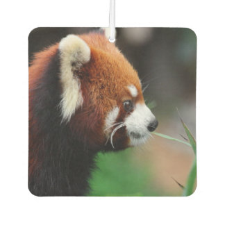 Red panda car air freshener