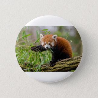 Red Panda Eating Green Leaf 6 Cm Round Badge