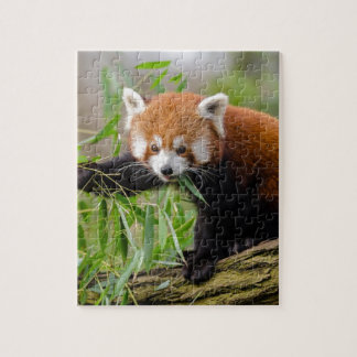Red Panda Eating Green Leaf Jigsaw Puzzle