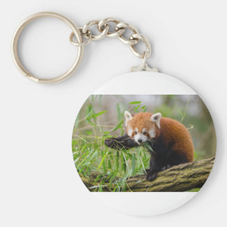 Red Panda Eating Green Leaf Key Ring