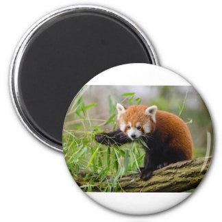 Red Panda Eating Green Leaf Magnet
