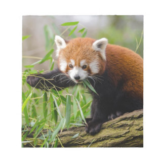 Red Panda Eating Green Leaf Notepad