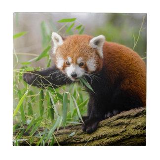 Red Panda Eating Green Leaf Tile
