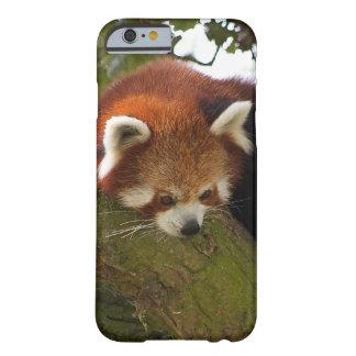Red Panda iPhone 6 Case