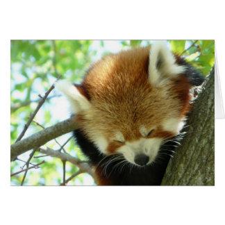 Red Panda Note Card