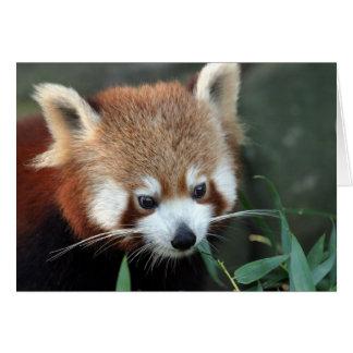 Red Panda, Taronga Zoo, Sydney, Australia Greeting Card