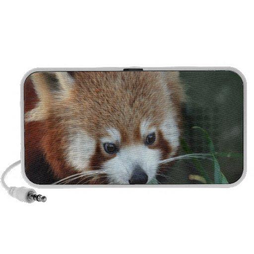 Red Panda, Taronga Zoo, Sydney, Australia Mini Speakers