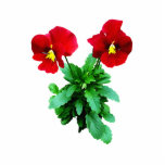 Red Pansy Duo