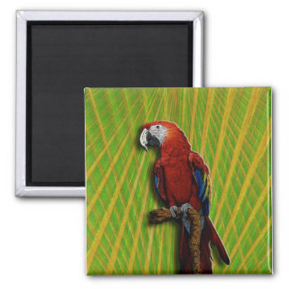 Red Parrot & Palms magnet