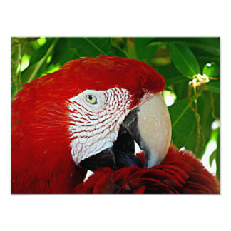 Red Parrot Photo Print