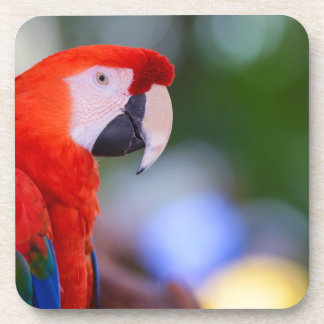 Red Parrot Photograph Coaster