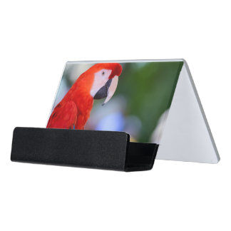 Red Parrot Photograph Desk Business Card Holder