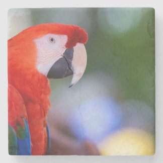 Red Parrot Photograph Stone Coaster