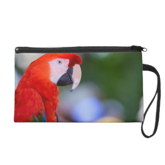 Red Parrot Photograph Wristlet