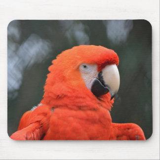 Red parrot portrait mouse pad