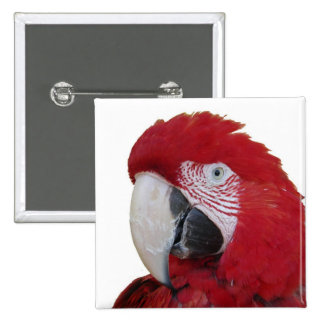 Red Parrot Square Button