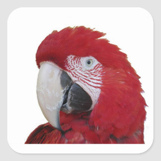 Red Parrot Square Sticker