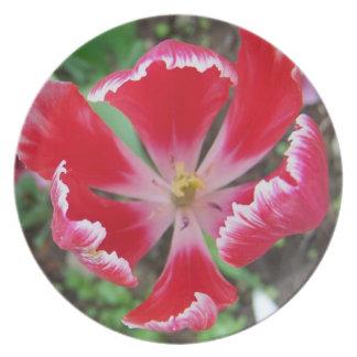 Red Parrot Tulip Dinner Plate