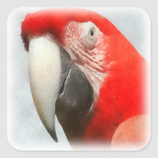 Red Parrot Watercolor Square Sticker