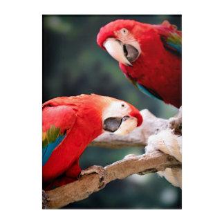 Red Parrots Acrylic Wall Art