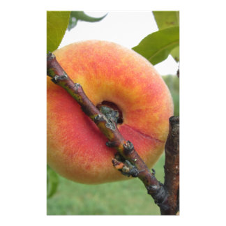 Red peaches hanging on the tree . Tuscany, Italy Customized Stationery