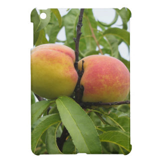 Red peaches hanging on the tree . Tuscany, Italy iPad Mini Covers