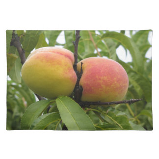 Red peaches hanging on the tree . Tuscany, Italy Placemat