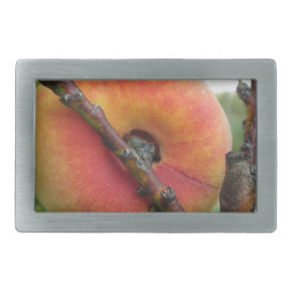 Red peaches hanging on the tree . Tuscany, Italy Rectangular Belt Buckle
