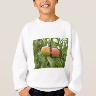 Red peaches hanging on the tree . Tuscany, Italy Sweatshirt