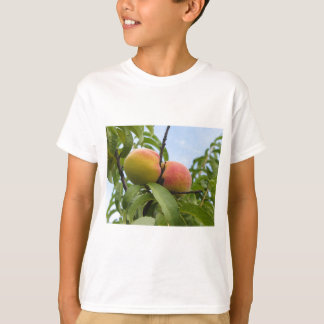 Red peaches hanging on the tree . Tuscany, Italy T-Shirt